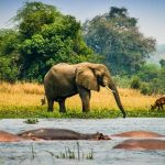 5 Best Places to Visit On Uganda Self Drive Trip
